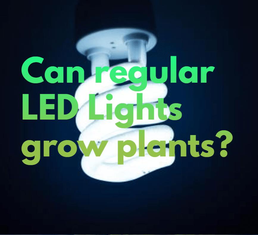 Can regular LED Lights grow plants?